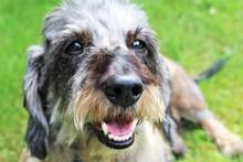 An Image Of A Dog - Dachshund