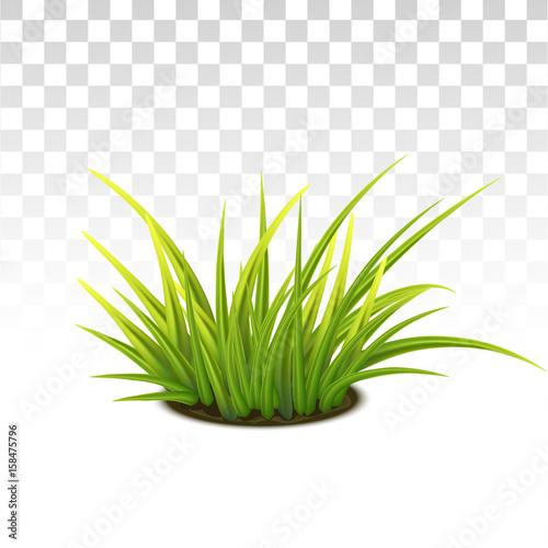 Tussock Of Green Grass Fototapet