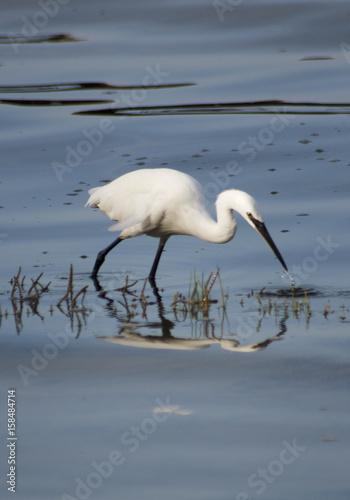 Photo  Wading Bird