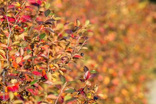 Fotografie, Obraz  Bush with yellow leafs