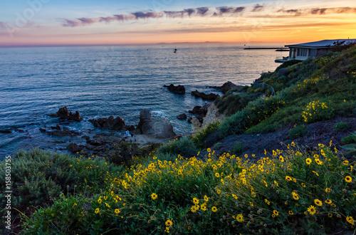 Fotografering  Corona Del Mar Super Bloom