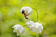 Ant On Flowers
