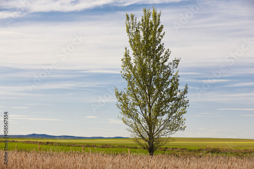 Green landscape with tree and sky. Gallocanta lagoon. Teruel, Spain