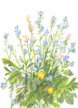 Bouquet Of Forget-me-nots With Watercolor
