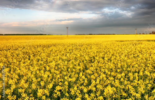Poster Oranje Flowering rape field with in the rural landscape