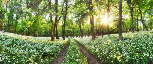 Staande foto Pistache Panorama of Forest green landscape with white flowers and path