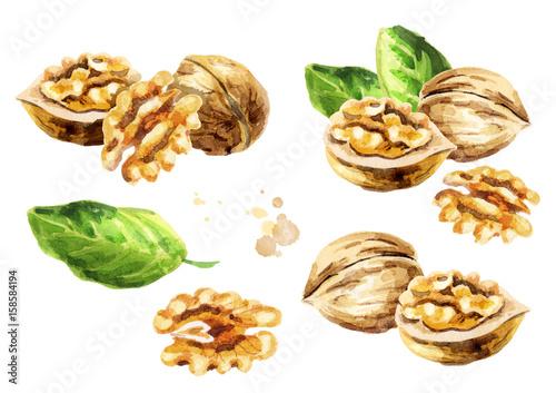 Obraz Walnut compositions set. Hand-drawn watercolor illustration - fototapety do salonu
