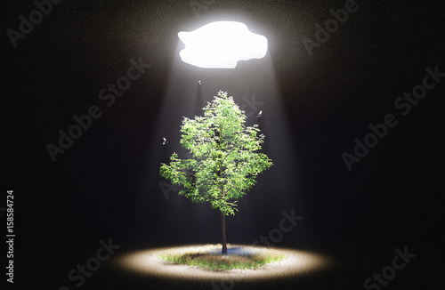 Fotografie, Obraz  Albero che cresce, nascita, idee, luce, 3d render