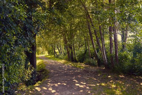 Tuinposter Weg in bos Ruta de senderismo bajo un bosque