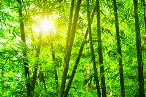 Keuken foto achterwand Bamboo Asian bamboo forest