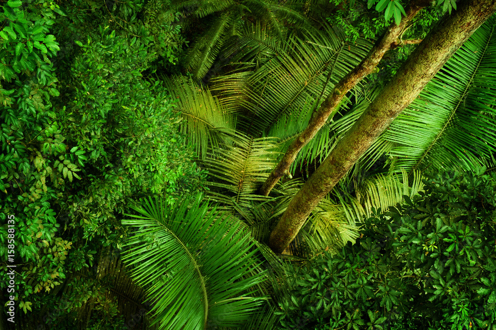 Fototapety, obrazy: Tropical dense forest from top