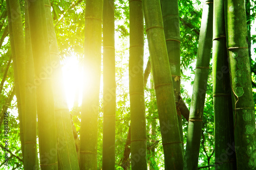 Foto op Canvas Bamboo Bamboo forest and sun light