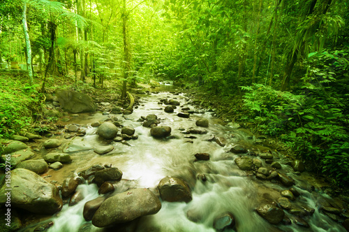 Canvas Prints Forest river River in jungle