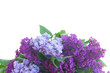 Bunch of fresh lilac flowers border isolated on white background