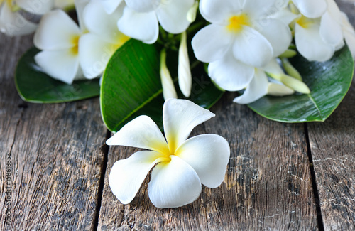 Photo Stands Plumeria white plumeria frangipani on wooden background