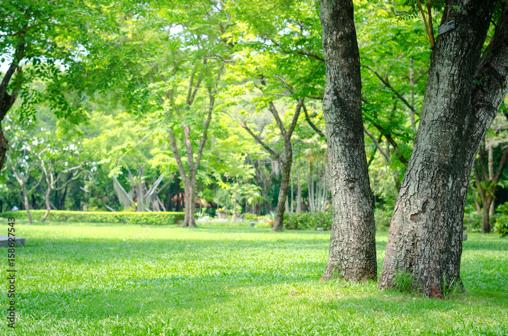 Fototapeta trees in the park with green grass and sunlight, fresh green nature background.