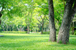 canvas print picture - trees in the park with green grass and sunlight, fresh green nature background.
