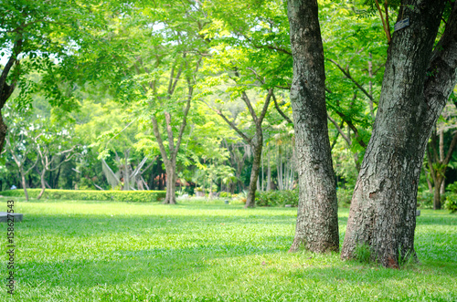 Obraz trees in the park with green grass and sunlight, fresh green nature background. - fototapety do salonu