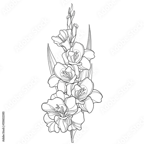 Fotografering Vector bunch with Gladiolus or sword lily flower, stem, bud and leaf in black isolated on white background