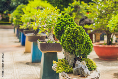Fotobehang Bonsai Bonsai and Penjing landscape with miniature evergreen tree in a tray