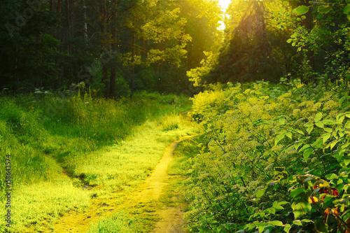La pose en embrasure Jaune лес