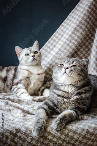 Fotografía  two cats family
