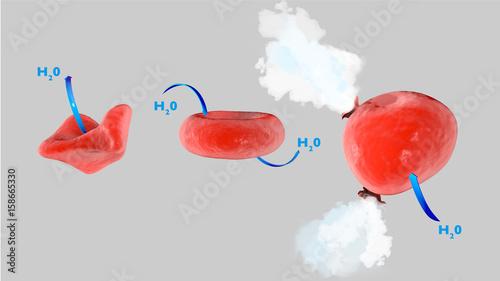 Osmosi cellulare, cellula in soluzione isotonica, cellula in soluzione ipertonic Canvas Print