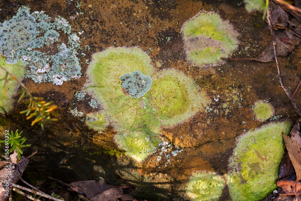 the investigation of microbial diversity in lichen and hairy cap moss on mt. arabia essay Yellowstone paint pots~yellowstone national park, wyoming, usa by american west photography find this pin and more on мир удивителен by koty cloud nodes photo - yellowstone hot pots by theamericanwestphotography.