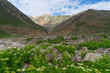 Landscape of Pakistan in summer season, Gilgit Baltistan, Pakistan