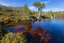 Wombat Pool, Cradle Mountain A...