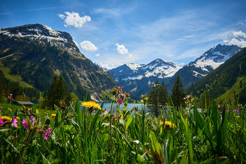 FototapetaVilsalpsee im Tannheimer Tal mit Blumenwies und Bergkulise im Frühling