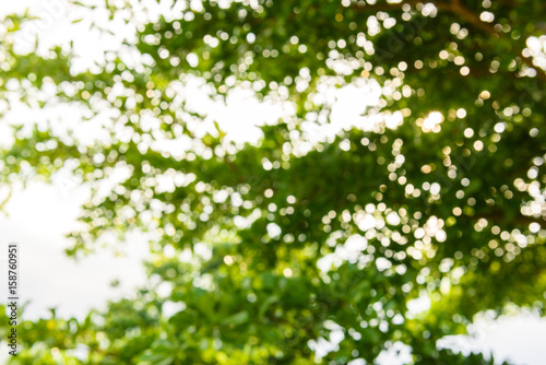 Cadres-photo bureau Arbre abstract nature background with blurry bokeh defocused lights