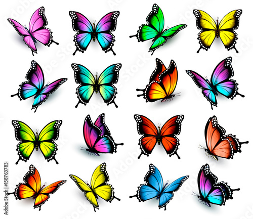 Fotografie, Obraz  Colorful butterflies set. Vector.
