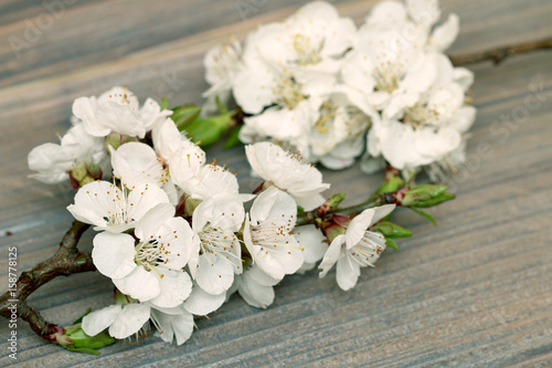 fruit flowers on a background of wood, tree structure