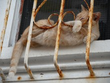 Orange Cat Sleeping In Window ...