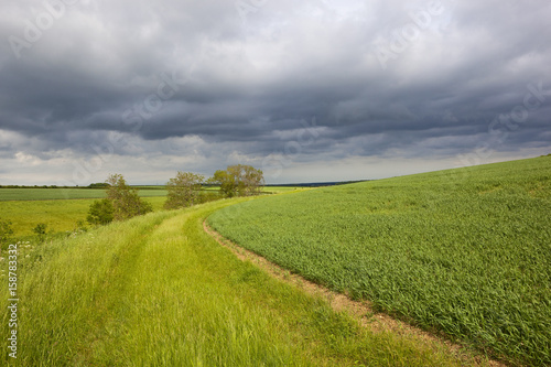 Foto op Canvas Pistache hillside wheat field