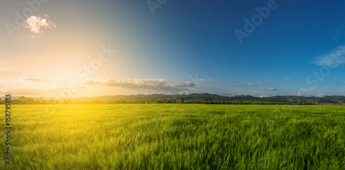 Fotobehang Oranje Vast green field at gorgeous sunset, a colorful panoramic landscape