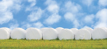 Wrapped Stacked Silage Bales Row Isolated Round White Plastic Film Hay Rolls Haylage Stack Rows Panorama Horizontal Closeup Summer Meadow Grass Sunny Sky Cloudscape Clouds Baling Panoramic Rural