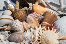 Close Up Of Shells On The Beach Sanibel Island