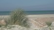Marram grass in sand dunes at the beach gently blow in the wind