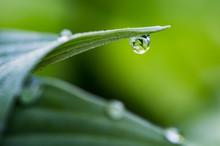 Dew Drop Reflecting Bright Green Plant