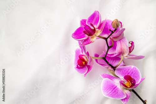 Fotobehang Orchidee The branch of purple orchids on white fabric background