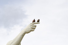 Two Birds On The Statue