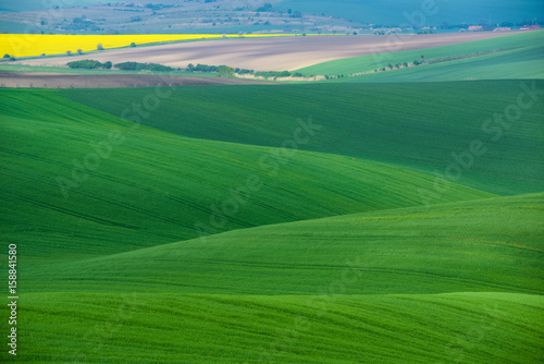 Foto op Plexiglas Groene Moravian Green Rolling Landscape With Field Of Wheat, Rape And Small Village.Natural Seasonal Rural Landscape In Green Color. Green wheat field with stripes and wavy abstract landscape pattern.Czech
