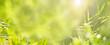 Grüner Hintergrund mit Bambus