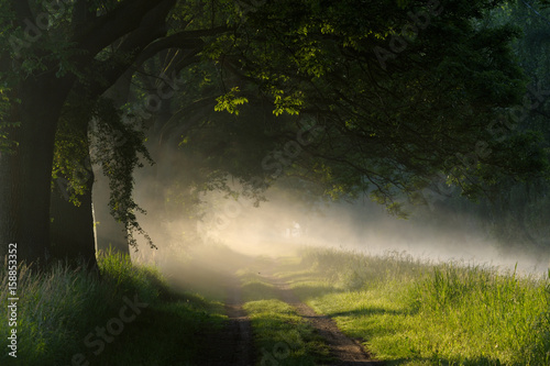 Foto op Plexiglas Landschappen Bäume im Morgennebel