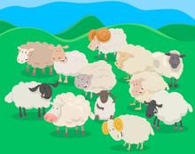 Flock Of Sheep Cartoon Illustr...