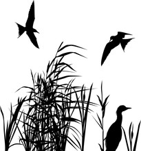 Two Birds Above Heron Between Reeds On White
