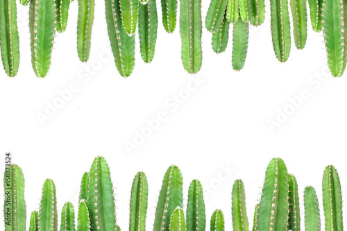 Cactus on isolated background Canvas Print