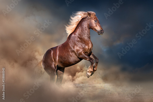 Red horse with long blond mane rearing up in dust